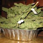 Bild (Ausschnitt): © Cannabis Training University -