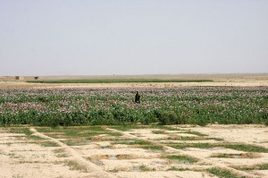 Afghane in seinem Opiumfeld