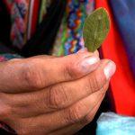 Ein Kokablatt in den Händen einer Bolivianerin | Bild (Ausschnitt): © Marcello Casal Jr./ABr [CC BY 3.0 BR]  - wikimedia commons