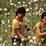 Kinder Opium Ernte  Bild (Ausschnitt): © Raw Opium Pain, Pleasure, Profits [CC BY-NC-ND 2.0]  - flickr