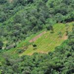 coca plantation | Bild (Ausschnitt): © n.v. - https://www.flickr.com/photos/ciat/4387016012/in/photolist-4UzbaC-eap3A8-fTRnX3-eFPTR9-dJL438-7FEABb-7FEB27-7FEARo-g2CFEX-g2CaHW-dJL3ZR-z44bU-g2CdbR-g2CEkH-g2CDMt-g2Ca2K-ktt79D