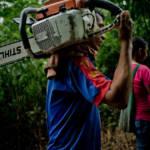 Das Abholzen von Wäldern in Mittelamerika ist leider keine Seltenheit | Bild (Ausschnitt): © CIFOR [CC BY-NC-ND 2.0]  - flickr