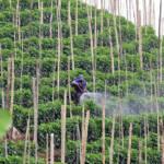 Pestizide werden in Mittel- und Südamerika in der Landwirtschaft sowie in der Drogenproduktion verwendet | Bild (Ausschnitt): © Neil Palmer [CC-BY-SA 2.0]  - Flickr