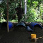 Trotz zahlreicher Eradikationsmaßnahmen hat Kolumbien noch keinen Erfolg gegen die Kokainproduktion erreicht | Bild (Ausschnitt): © Policía Nacional de los colombianos [CC BY-SA 2.0]  - Flickr