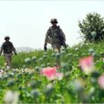 Durch Opiumproduktion erwirtschaften die Taliban 60 Prozent ihrer Einnahmen | Bild (Ausschnitt): ©  illuminating9_11 [CC BY-ND 2.0]  - flickr